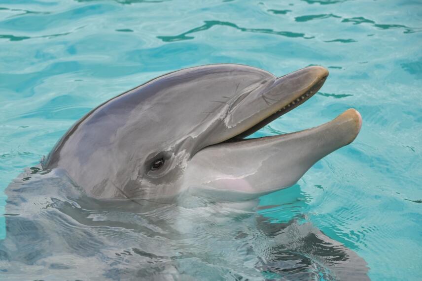 delfin 856x571 1 13